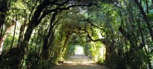 Jardins de Boboli I